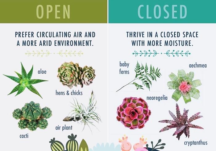 quelles plantes choisir pour faire un terrarium ouvert ou fermé, espèces végétales aloé aériennes pour mini jardin ouvert