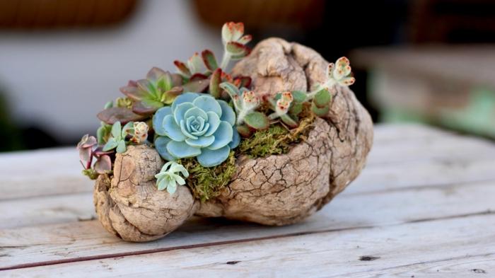 mini jardin avec succulents et mousse, petites plantes vertes plantées dans un morceau de bois