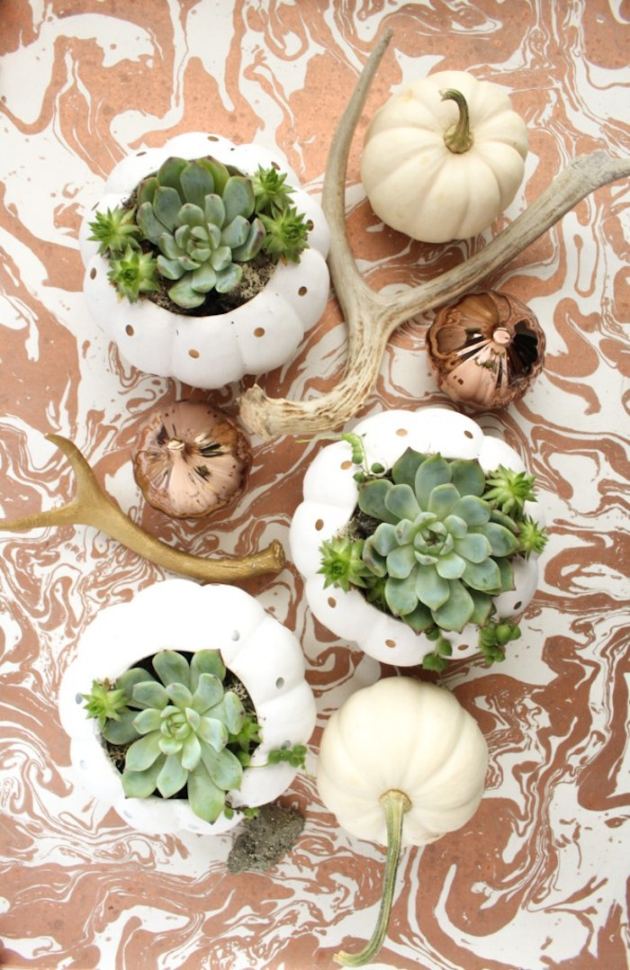 petit terrarium plante en citrouille avec des succulents à l intérieur sur une surface motif marbre, deco centre de table terrarium et bois flotté