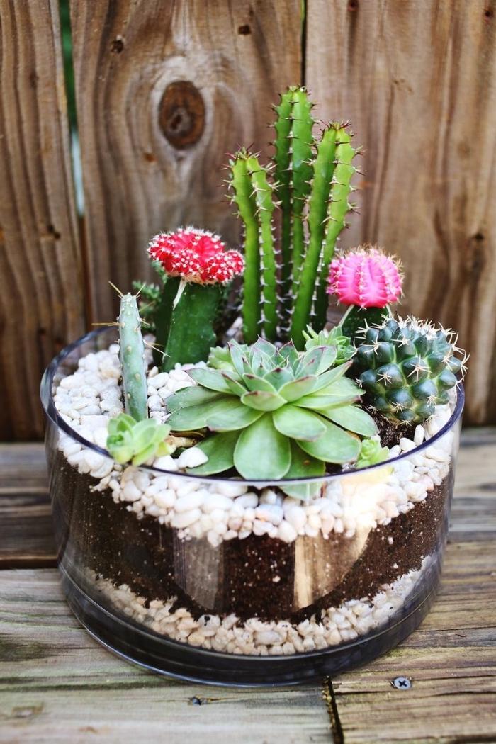 joli mini jardin dans un récipient en verre ouvert rempli de galets et de terreau pour plantes succulentes et cactus