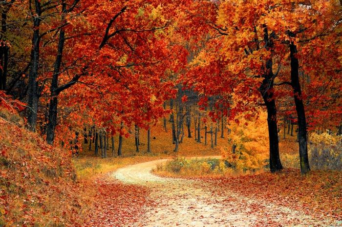 sentier dans la forêt, arbres aux feuilles rouges, clairières, jolie paysage pour écran de verouillage