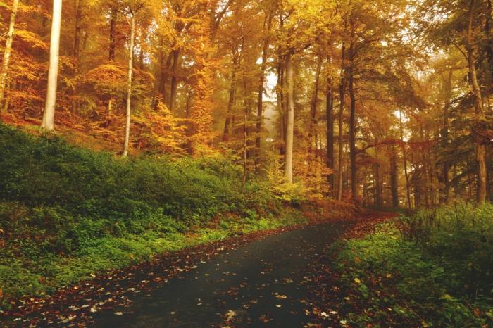 chemin forestier, forêt aux couleurs d'automne, fond d'écran paysage d'automne