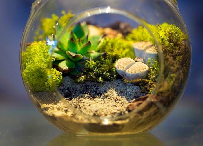 exemple comment utiliser un aquarium recyclé pour faire un terrarium avec plantes vertes sable et cailloux