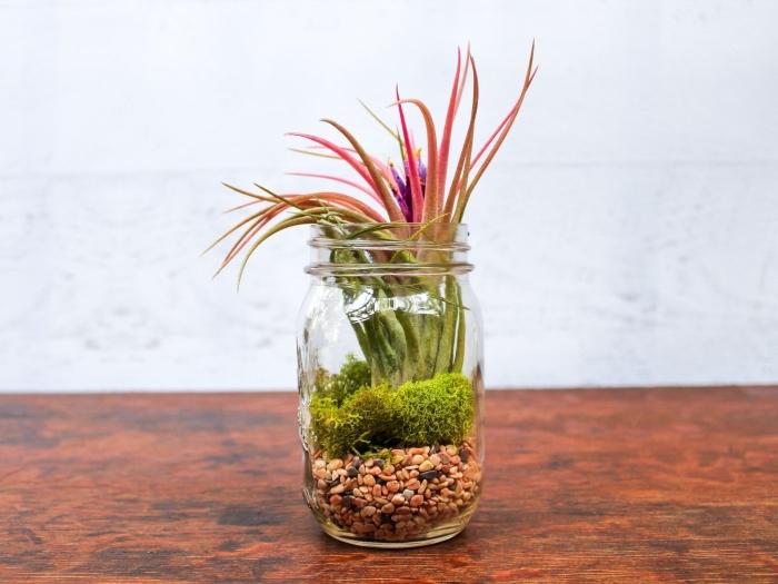quelles plantes pour un mini jardin d'intérieur, modèle de terrarium avec plantes succulentes sur mousse et cailloux