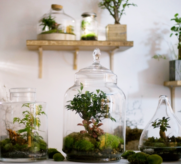 terrarium plante en bocal le mini jardin parfait pour votre int rieur obsigen. Black Bedroom Furniture Sets. Home Design Ideas