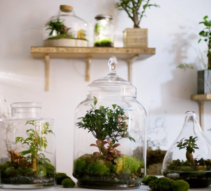 créer un jardin avec mini plantes vertes dans un contenant en verre ouvert ou fermé, modèle de mini jardin intérieur