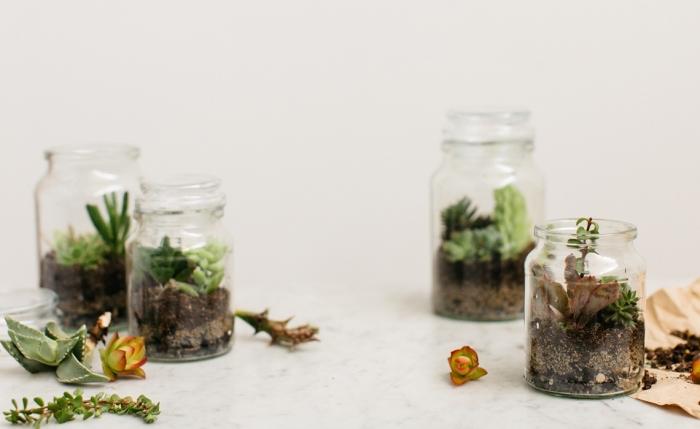 quelle plante pour terrarium ouverte, exemple humide plante en bocal fermé, modèle de jardin miniature dans bocal en verre