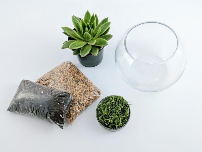 modèle de terrarium bocal aquarium rond ouvert avec plantes succulents, idée comment remplir un terrarium plantes sol aride