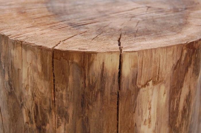 photo de tronc d arbre sans écorce séché au sol et craquelure fente