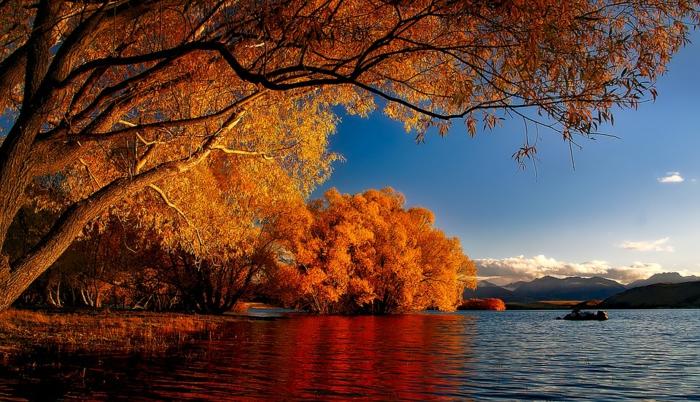 arbres penchés au-dessus d'une rivière, paysage d'automne magnifique, nuages