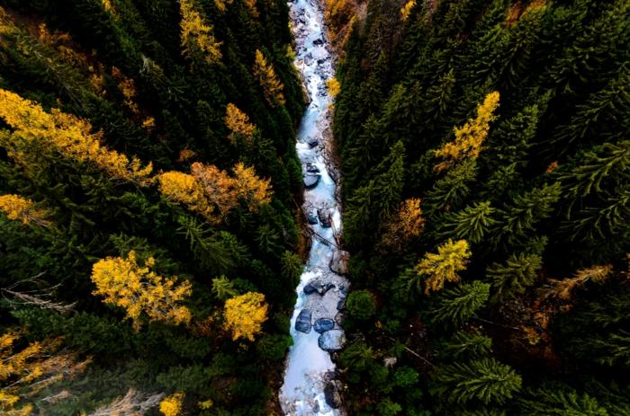 joli paysage, rivière rapide, torrent, sapins à la fin d'été, fond d'écran automne