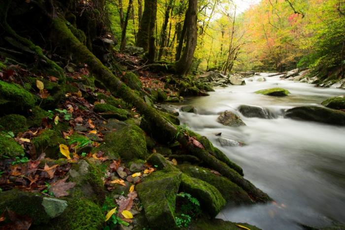 forêt verte, mousse, feuilles d'automne, torrent, paysage enchantant, jolie paysage