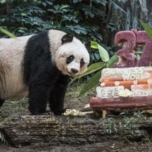 Le gâteau d'anniversaire rigolo - trouvez les idées les plus cool!