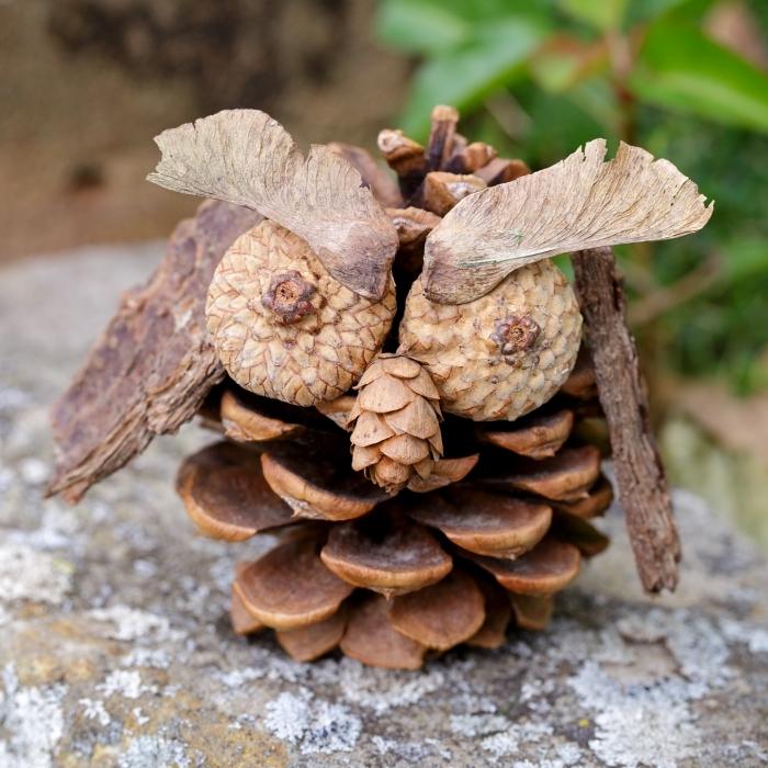 faire une figurine hibou facile en pomme d epin, idée activité manuelle automne maternelle avec matériaux naturels