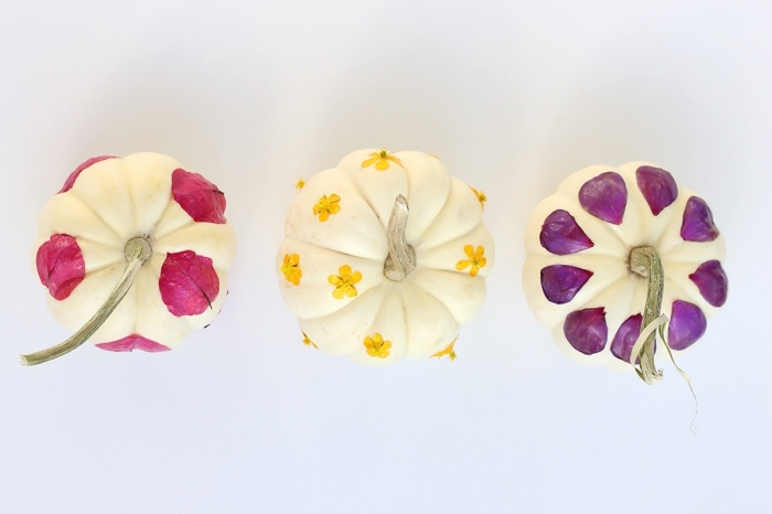 idée projet créatif avec citrouille blanche et feuilles séchées, modèle de décoration citrouille facile avec colle et fleurs séchées