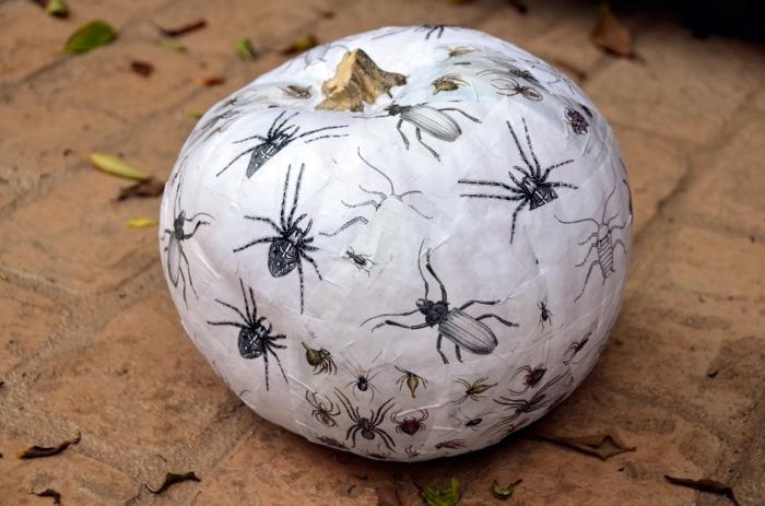 idée déco facile d'une citrouille pour Halloween, coupures de papier aux motifs insectes pour déco de citrouille