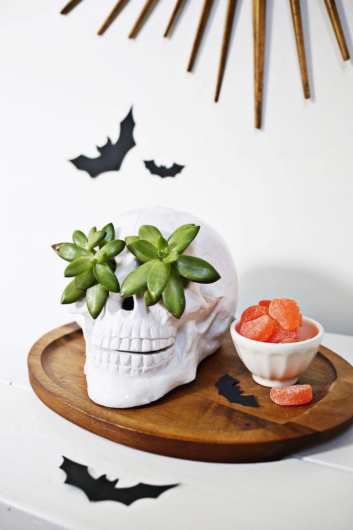 decoration halloween en crâne artificielle avec cavités oculaire décorés de plante succulente et des silhouettes en papier chauve souris