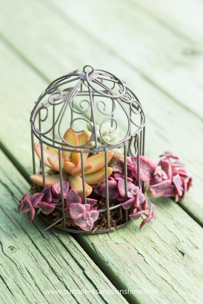 centre de table cage avec succulents, joli accent pour le mariage champêtre chic