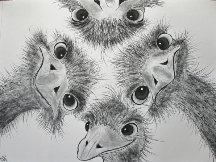 Dessiner des animaux au fusain, dessiner un dessin amusant facilement pas à pas, chouette dessin ridicule
