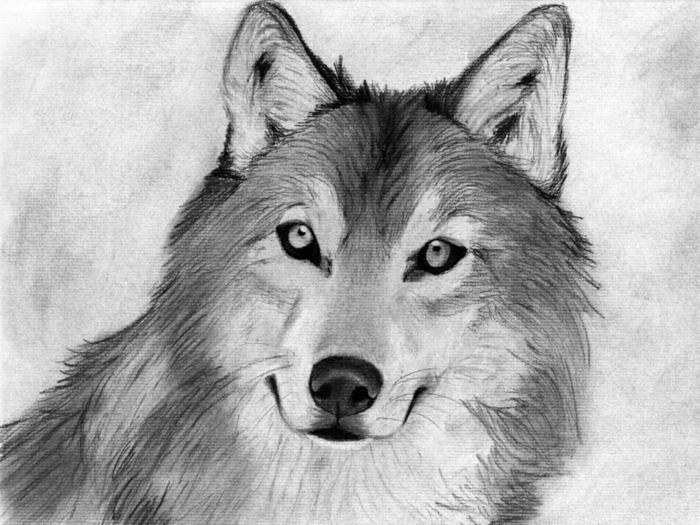 Beau dessin noir et blanc facile, dessin au fusain technique différente, enfant dessins essaie animaux au fusain