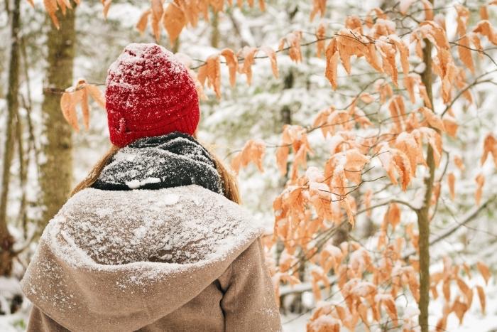 idée fond ecran paysage hiver, photo de la nature dans une forêt aux arbres nus ou avec feuilles séchées couvertes de neige