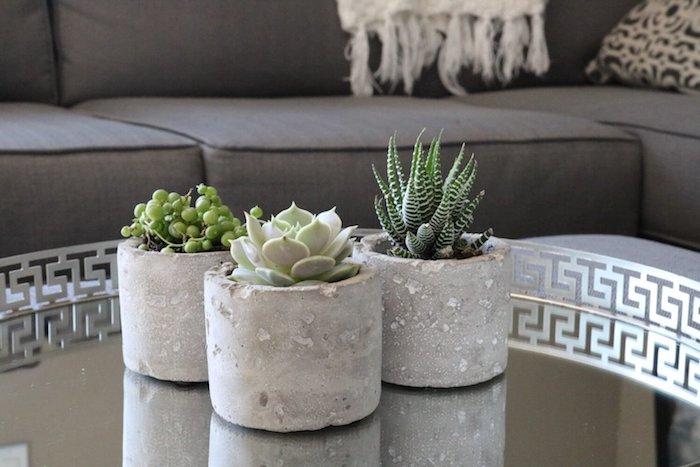 exemple de plantes grasses d intérieur, collier de perles, succulent et cactus zèbre en pot de béton, belle deco table basse de salon