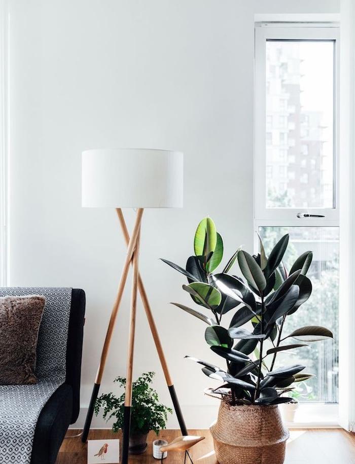 idee deco salon moderne avec panier cache pot pour un arbre caoutchouc, parquet bois clair, canapé noir, murs blancs