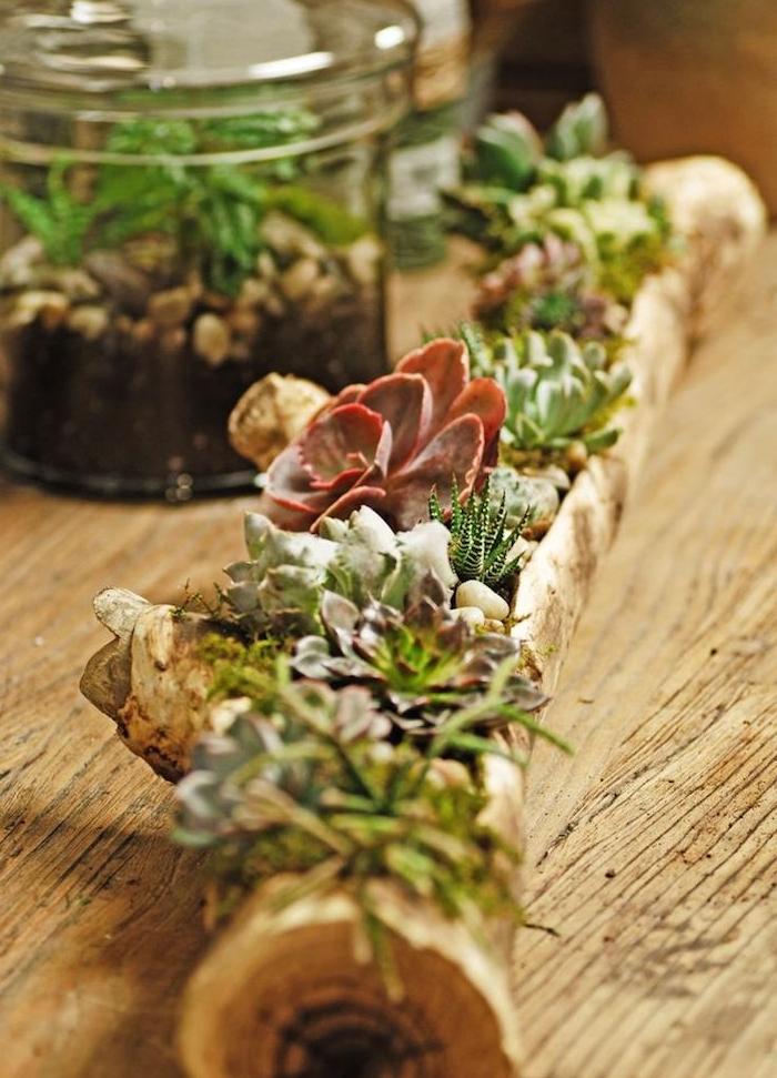 idee de centre de table original en bois flotté avec des plantes grasses d intérieur plantées à l intérieur et terrarium bocal de verre