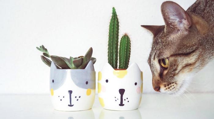 decoration appartement originale, plante succulente et cactus en cache pot chat et un chat réel, plante d'intérieur originale