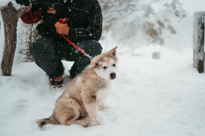 photo de petit chien en promenade dans une forêt enneigée, idée wallpaper gratuit pour pc sur le thème neige