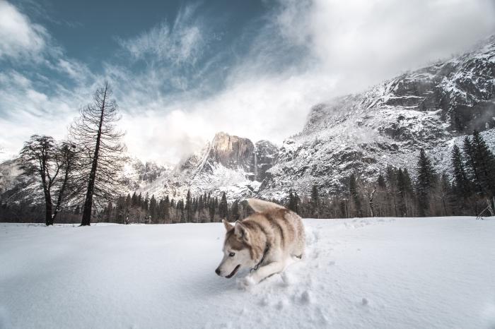 photo ultra mignonne d'un chien qui joue dans la neige, idée paysage hiver avec ciel nuageux et forêt enneigée