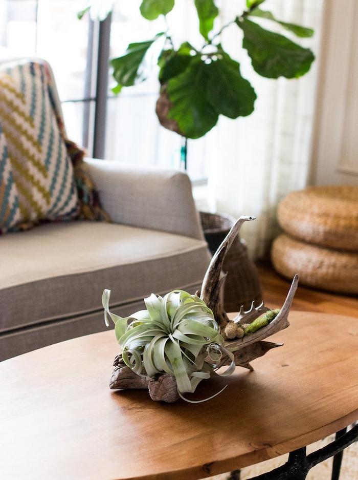 idée de filles des aires, air plante succulente verte accrochée sur une pièce de bois flotté. table bois et métal et canapé gris