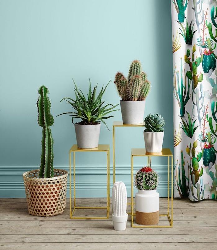 deco salon aux murs bleus, les plus belles plante d intérieur, plantes grasses et cactus sur des tables minuscules décoratives, parquet bois but, rideaux motif fleuri