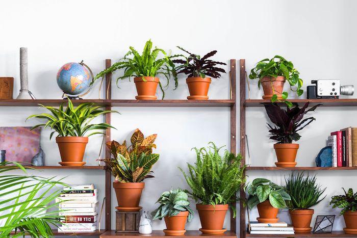 étagères bois décoratives avec des objets decol livres et multitude de plantes vertes en pot, interieur deco zen