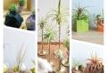 Choisissez la meilleure plante d'intérieur originale pour une bouffée de fraîcheur à la maison