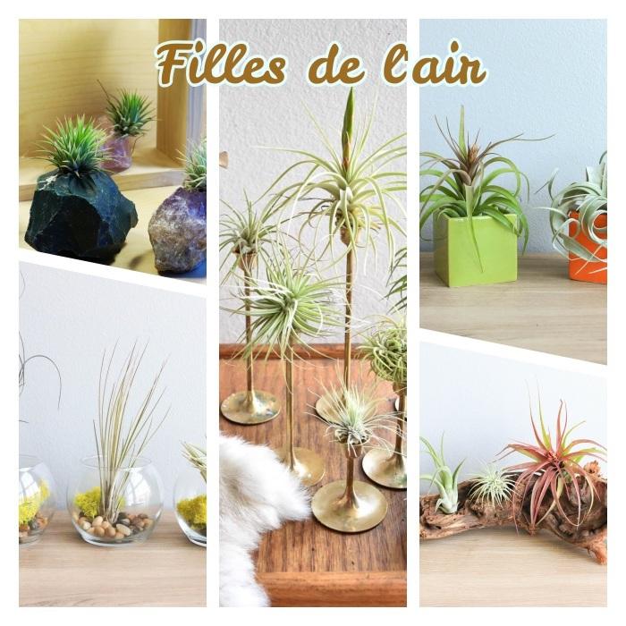 les filles de l air, idée quelle plante d intérieur originale choisir, idée plante sans racine à accrocher sur bois flotté, bougeoir, terrarium plante ou pierre decorative