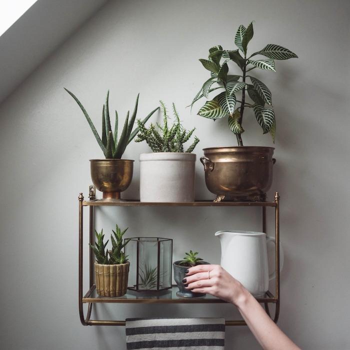 étagère en laiton avec jardin de plantes grasses d intérieur en pots de laiton, petit terrarium avec air plant, deco murale originale