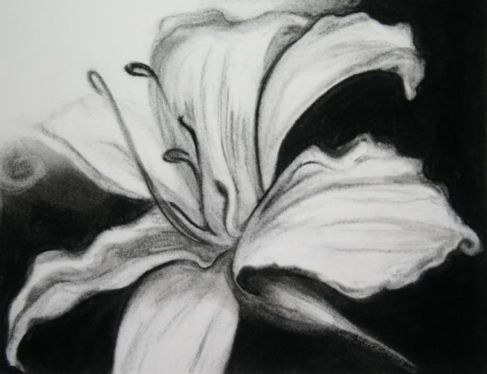 Dessin fusain nature, fleur au noir et blanc fusain à faire soi même, idée cool dessins ébénisterie fleur detillee