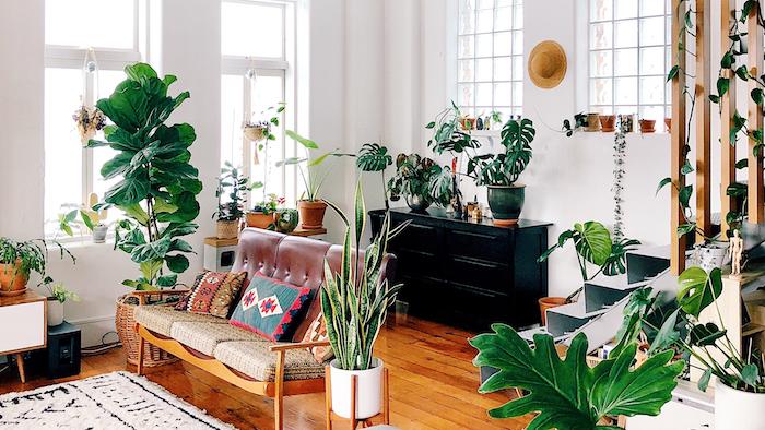 les plus belles plantes d intérieur, canapé à assises en cuir, parquet bois foncé, meuble vintage noir, plante verte intérieur originale
