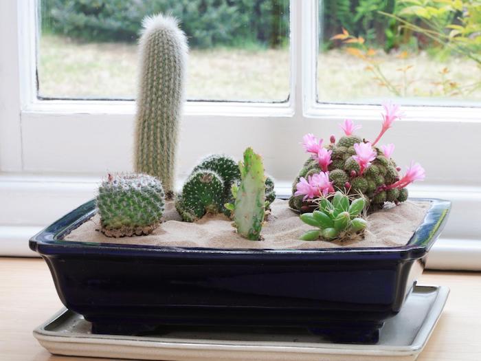 petit jardin de cactus plantés en sable dans un bac à fleur bleu marinne, idée de jardin miniature intérieur au rebord de la fenêtre