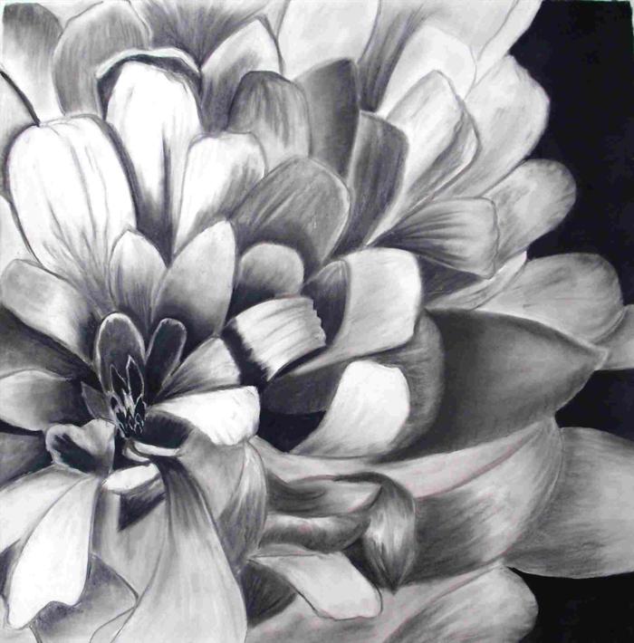 Dessin facile a dessiner, dessin au fusain noir sur feuille de papier blanche, fleur avec beaucoup de petailles