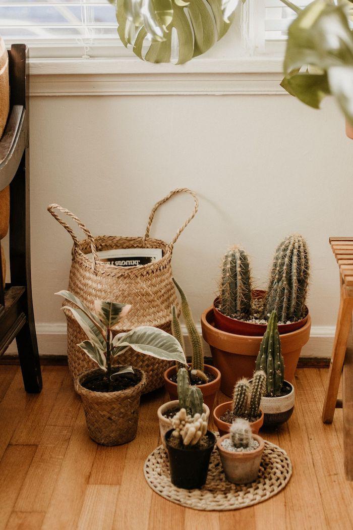 deco tropicale salon avec des pots de cactus et autres plantes vertes et panier rangement sur parquet bois clair, deco salon zen