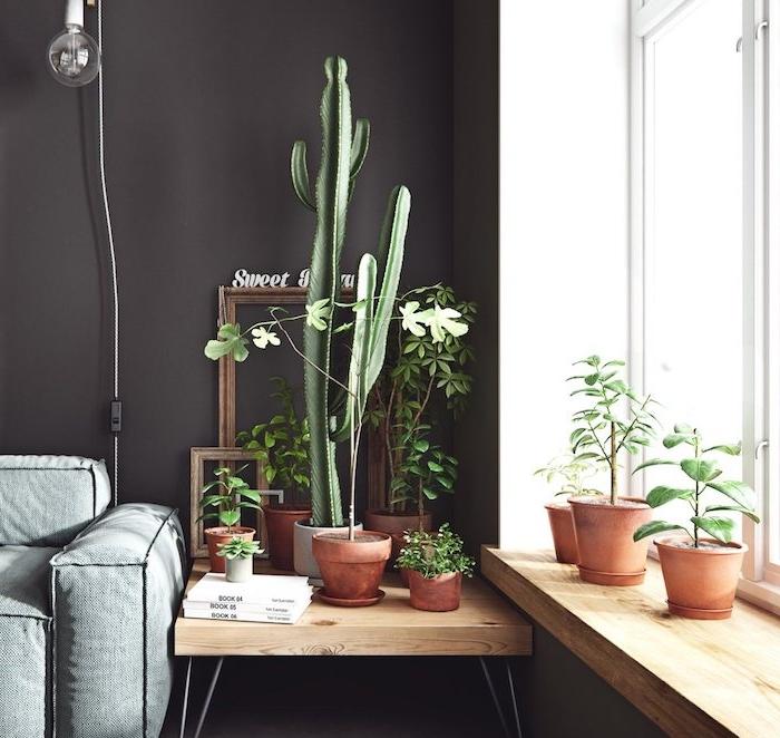 deco salon aux murs repeints de noir avec decoration rebord de fenêtre et table de sevice de cactus et autres petites plantes et cadres vides, plante d appartement originale