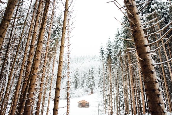 exemple de fond ecran noel ou hiver, photo d'une petite maison de bois dans une forêt avec arbres couverts de neige