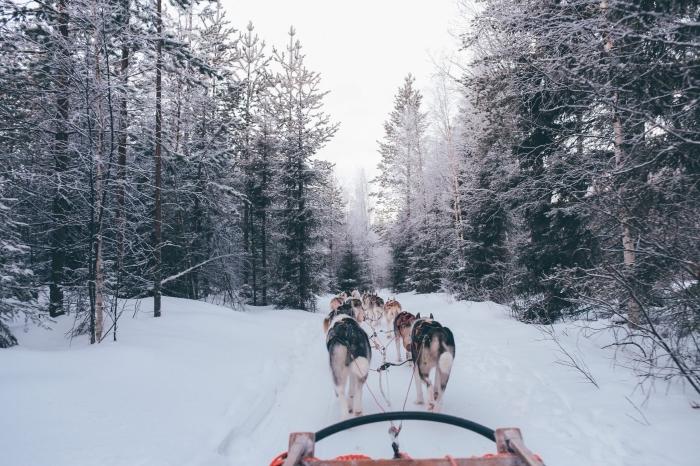 paysage de neige à télécharger, photo gratuite sur thème hiver, photo forêt enneigée et traîneau à chiens hiver
