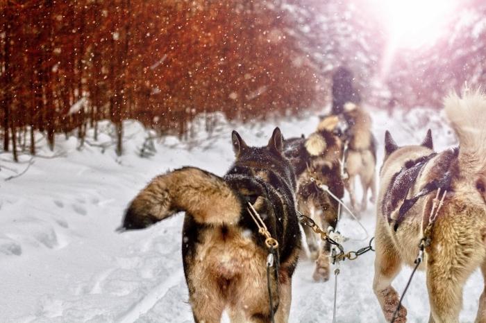 idée fond d'écran hivernal pour ordinateur, photo gratuite à télécharger sur pc, exemple paysage de noel avec un traîneau à chiens