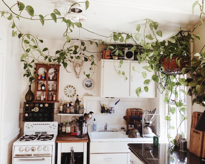 exemple de plante grimpante interieur, deco cuisine blanche avec des rangements ouverts exposés, façade de cuisine blanche, style cuisine traditionnelle