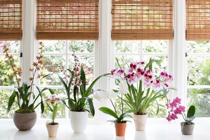 plusieurs plantes fleuries d'intérieurs rangées près de la fenêtre en pot, différents genres d orchidées et autres fleurs