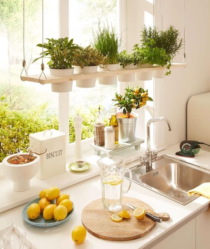 deco cuisine originale avec citronnier nain et des fines herbes en pot suspendus rangés sur une planche bois, cuisine blanche vintage chic