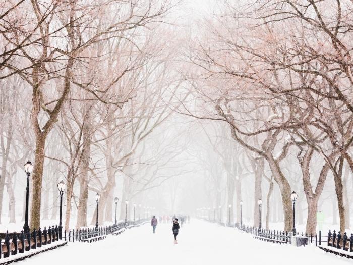 jolie photo d'hiver dans un parc aux arbres nus, idée fond ecran noel gratuit, image à télécharger sur thème hiver